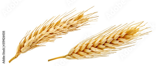 Foto Fresh golden wheat ear isolated
