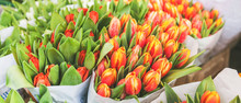 Tulips For Sale At Street Flow...