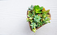 Top View Of Mix Sucuclent Plant Arrangement In Heart Shape Plant Pot ,white Wood Table Top Background