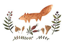 Watercolor Set Of Wild Fox And Forest Herbs. Leaves, Mushrooms And Berries Isolated On White. Children Cartoon Set Perfect For Cards, Prints, Posters, Design, Fabric.