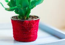Schlumbergera Cactus In Pot De...