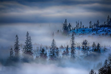 Nature Landcape Fog Blue Trees Slovakia