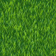 Green Grass Texture Or Backgro...