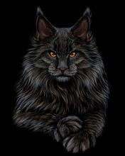 Cat. Graphic, Artistic, Hand-drawn, Color Sketch Portrait Of A Maine Coon Cat On A Black Background.