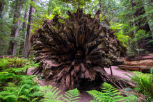 Looking At The Roots Of A Huge...