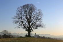 Single Tree On A Hill Near Mar...