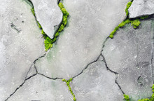 Green Grass Grows In The Cracks Of A Concrete Wall.