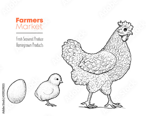 Stampa su Tela Chicken, chick and eggs hand drawn, vector illustration