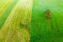Germany, Bavaria, Munsing, Aerial View Of Lone Oak Tree Growing In Green Countryside Meadow