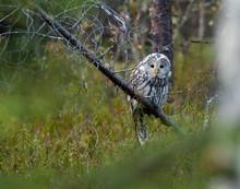 Finland, Kuhmo, North Karelia,...