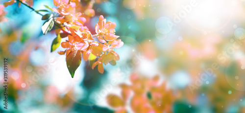 Beautiful blossoming spring tree with tender flowers Canvas-taulu