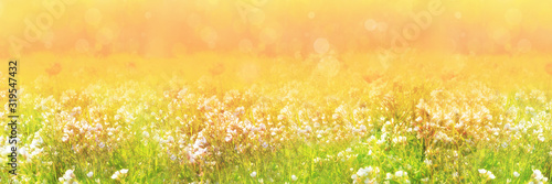 blurred-panorama-of-morning-meadow