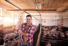 Pig Farming. Shot Of Smiling Farmer Worker Standing In Pig Pen At The Cattle Farm.