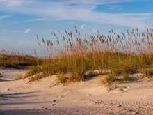 Sand Dune At Anastasia State P...