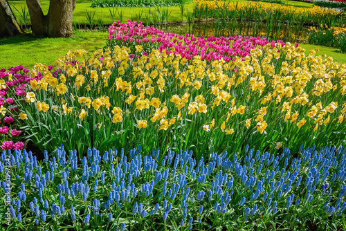 Photo Flowerbed of narcissus and tulips