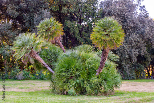 Valokuva Italy, Naples, royal palace of Capodimonte, view of the vegetation