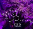Leinwanddruck Bild - Formula of canabinol, against the background of cannabis. Medical marijuana.