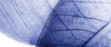 Natural Blue Background. Autum...
