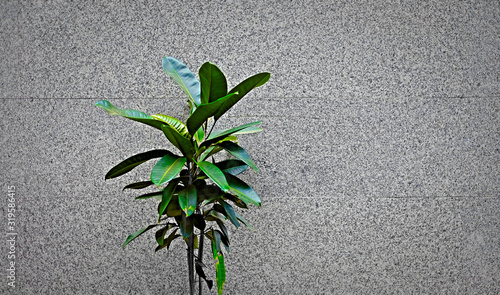 Photo A single dark green plant isolated on background of gray wall, ample text space on one side