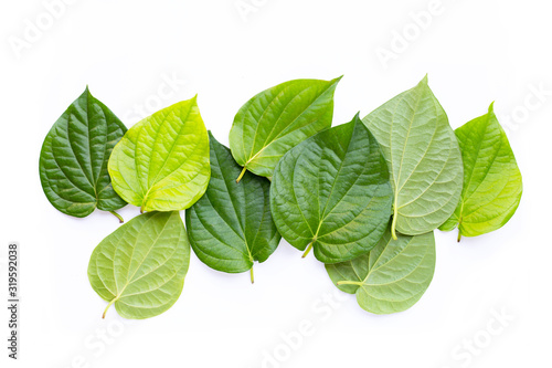 Green betel leaves, Fresh piper betle on white background. Canvas Print