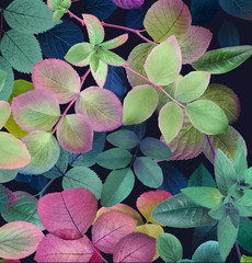 Naklejka Na szybę Colorful leafs on dark background,Mother's Day,wedding,birthday,Easter,Valentine's Day,Spring,Summer