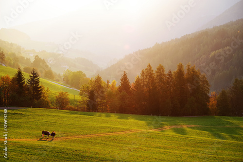 Scenic View Of Landscape During Sunset - fototapety na wymiar
