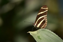 Extreme Close-Up Of Butterfly On Leaf