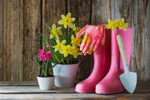 Rubber Boots And Spring Flower...