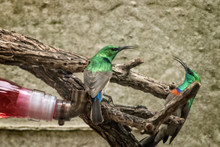 Sunbirds Perching On Branch Against Wall