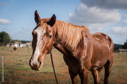 A Horse on a farm in Vinales, Cuba.