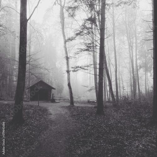 Fotografie, Obraz Fog surrounding trees in forest