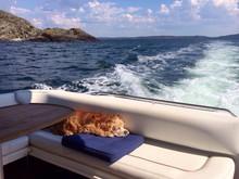 Dog Sleeping In Boat At Blue Sea