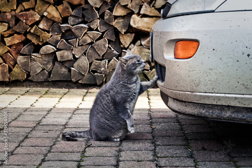 Stray Cat By Dirty Car Against Pile Of Firewood Fotobehang