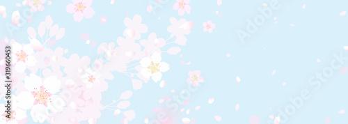 ふわふわ幻想的な桜と春の空 Canvas Print