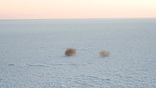 Tumbleweeds Roll Across The Surface Of A Salt Lake