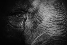 Full Frame Shot Of Elephant Head