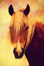 Portrait Of Light Brown Horse ...