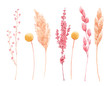 canvas print picture - Beautiful bouquet composition with watercolor herbarium wild dried grass in pink and yellow colors. Stock illustration.