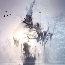 Double Exposure Of Trees And Birds On Sunny Day