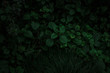 dark green texture of leaves and grass