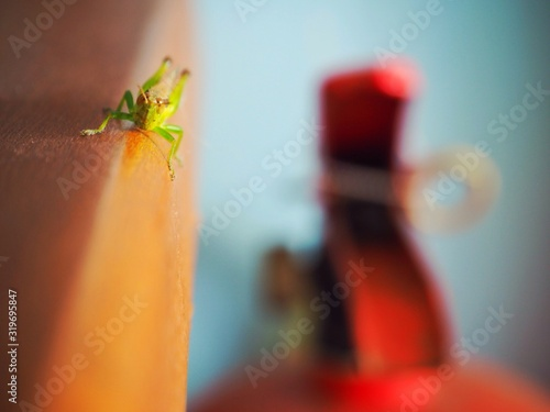 Close-Up Of Grasshopper On Wood Fototapet