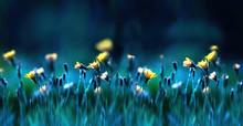 Floral Summer Spring Backgroun...