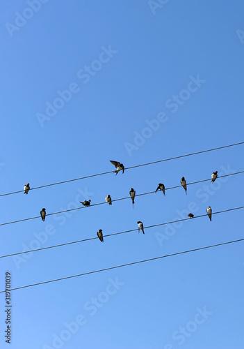 Photo Golondrinas posadas en cables eléctricos con un fondo de cielo azul