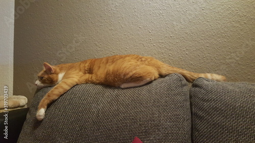 Fotografie, Obraz Ginger Cat Lying On Cushion Against Wall At Home