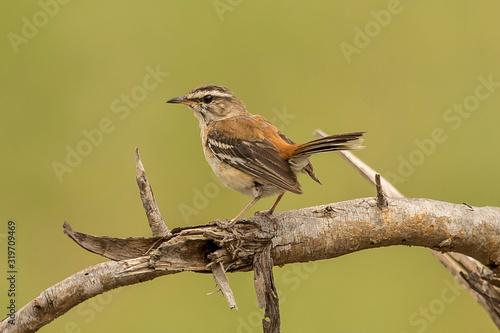 Valokuva Close-Up Of Bird Perching On Branch