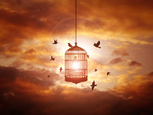 Cage Amidst Birds Against Cloudy Orange Sky During Sunset