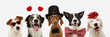 banner five dogs celebrating valentine's day with a red ribbon on head and a heart shape diadem or glasses, top hat and bowtie. isolated against white background.