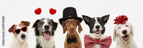 obraz PCV banner five dogs celebrating valentine's day with a red ribbon on head and a heart shape diadem or glasses, top hat and bowtie. isolated against white background.