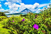 Flowers And Sky, Landscape With Arenal Volcan In Costa Rica Central America