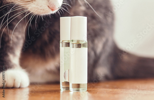 cute cat sniffs perfume bottles with oil perfumes in a roll bottle sitting on a Wallpaper Mural